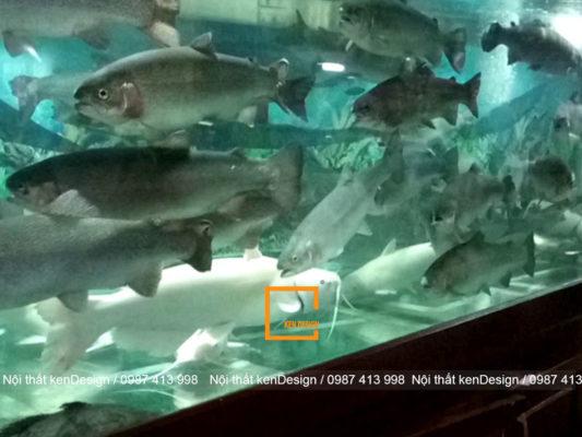 Cach thiet ke be ca nha hang hieu qua nha ban da biet 3 533x400 - Cách thiết kế bể cá nhà hàng hải sản hiệu quả nhất, bạn đã biết?